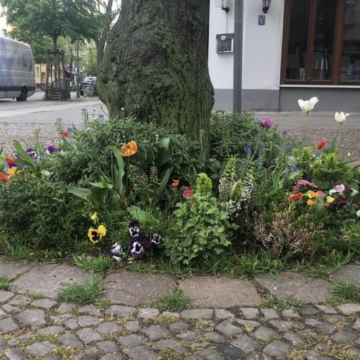 Baumscheibe Krumme Ecke Pestalozzistraße.